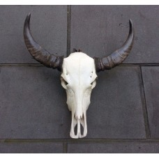"2019 ""SALE"" Water buffallo skull, detachable horns, bone, real, bar/man cave decor   323262976741"