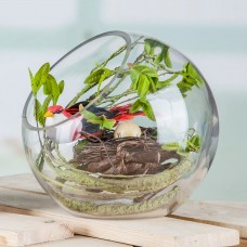Globe Glass Ball Planter Vase Flower Plant Pot Terrarium Container Tabletop TOOP   132705222044
